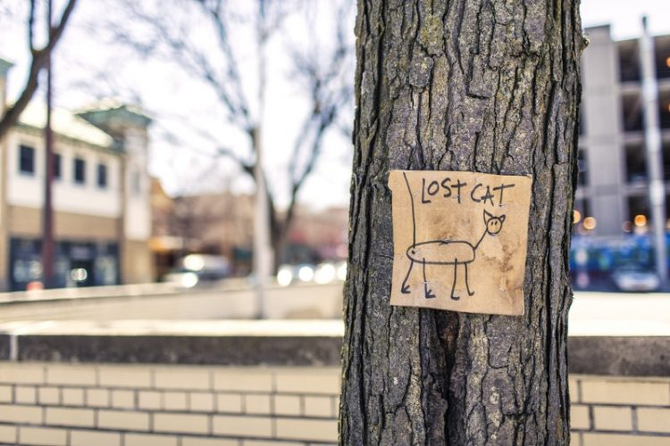 a drawn lost cat sign