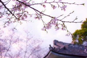 Why everyone should visit Japan